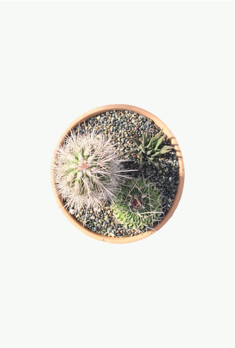 Succulent composition