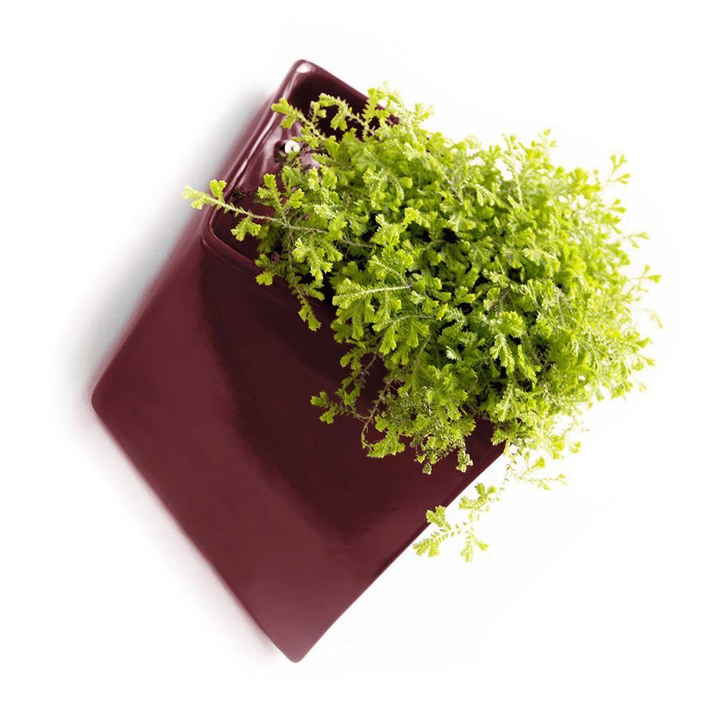 Ceramic wall planter