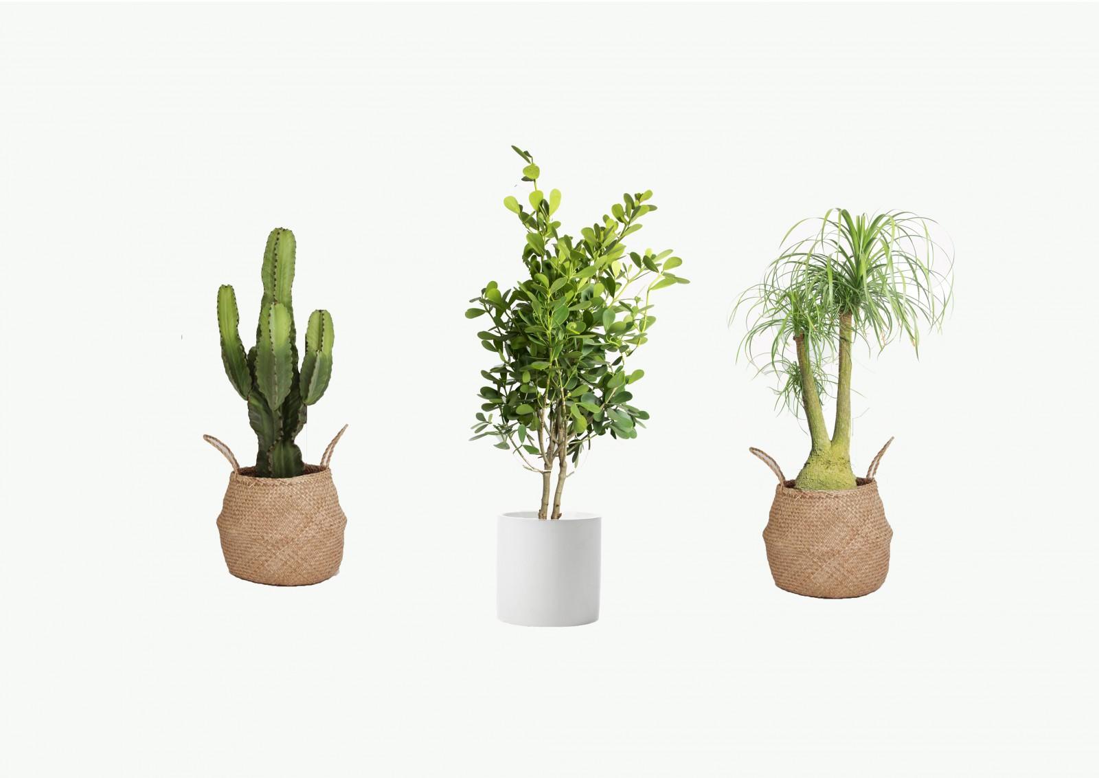 La Belle Plant Nursery